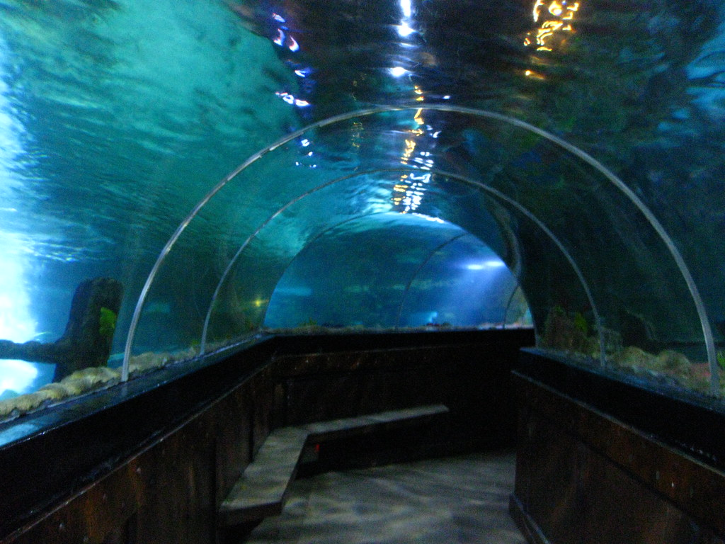 Brighton Sea Life Centre (12) A tunnel underneath the aqar ...