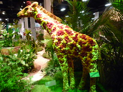 Safari Exhibit at Boston Flower Show 2010 | by First Daffodils
