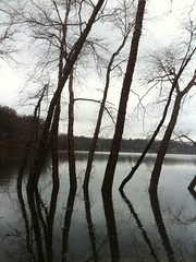 Trees in Water | by stevegarfield