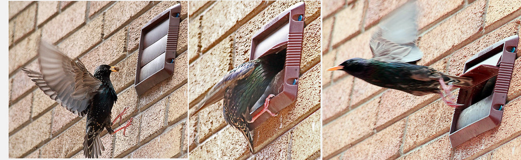 bathroom exhaust vent home for the birds cheeky birds will flickr