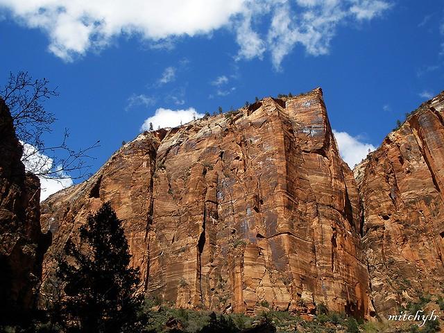 Cliffs Of Zion 11