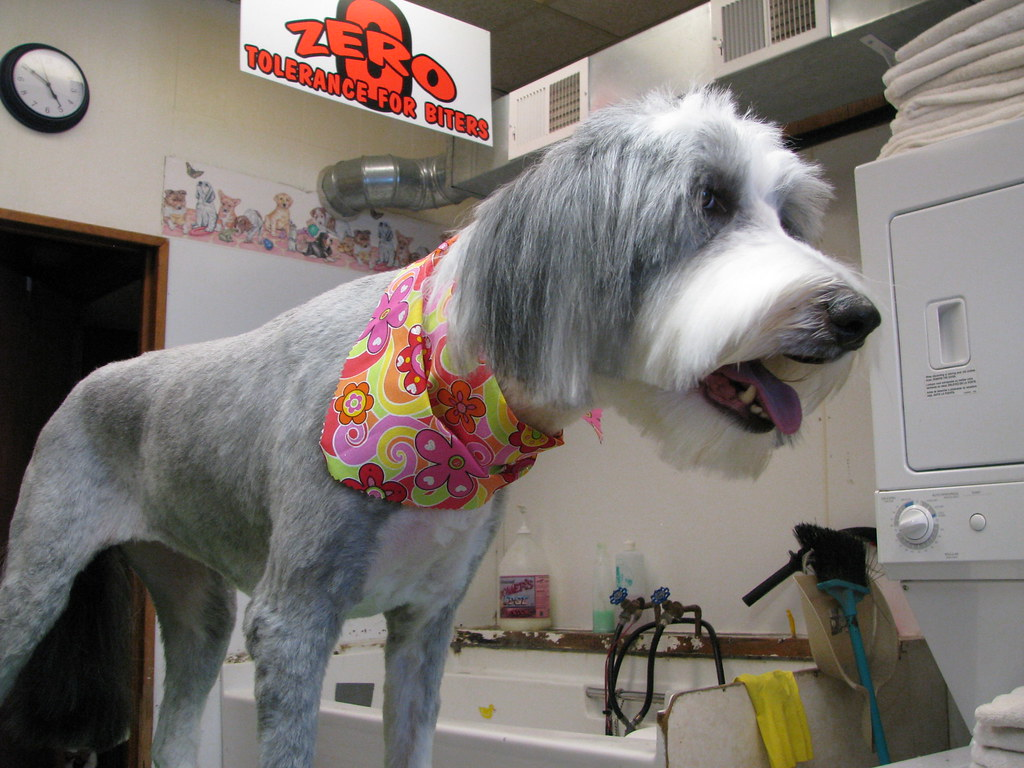 Mobile Dog Grooming Naples Florida