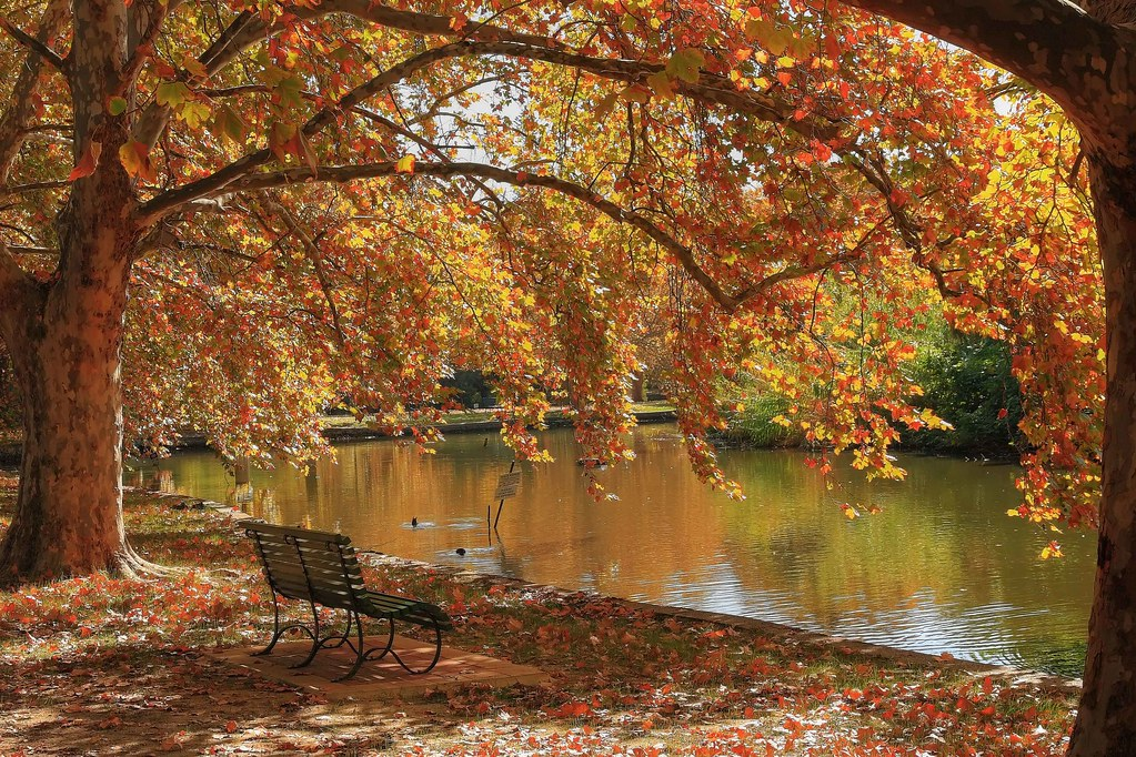 Hyde Park Autumn Hyde-park 1 | by Hamsters