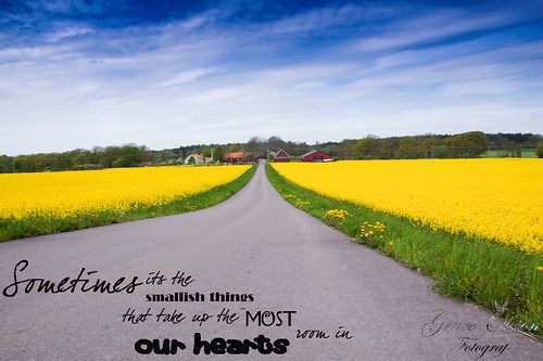 Yellow fields - South of Sweden | by Grace Olsson Fotograf(I´m abroad)