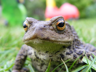Toad | by Dave McLear