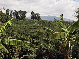 Doka Coffee Plantation | by colros