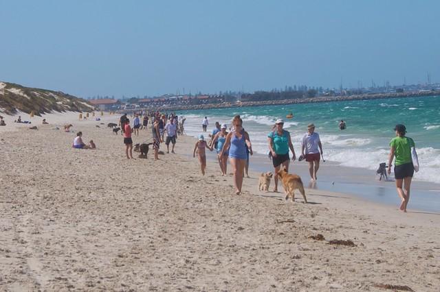 Whitfords Dog Beach Perth Wa By Flynnmark