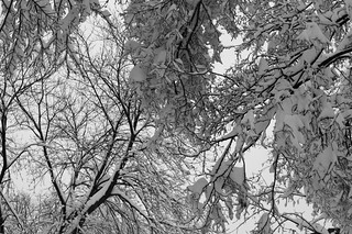 Snowy Branches | by Rukasu1