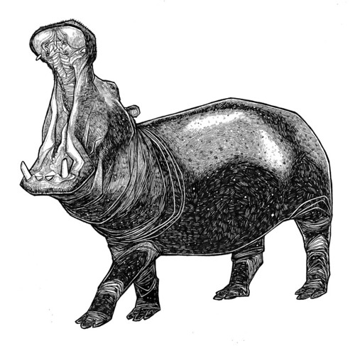 Hippo drawing this is one of the hardest animal drawings - How do you make wild animal in little alchemy ...