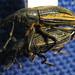 NHM Coleoptera Dept.