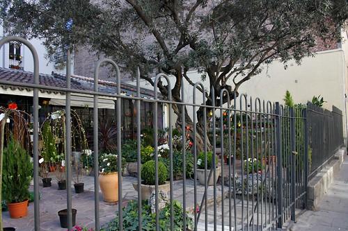 Vivero de plantas que fue cementerio de la iglesia de san - Viveros plantas madrid ...