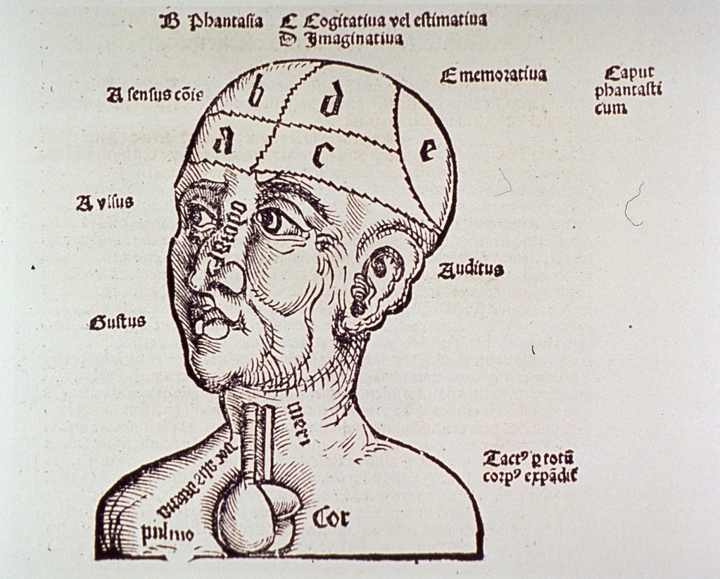 Human Head And Shoulders With Brain Partitioned And Label Flickr