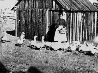 Woman feeding geese in the Albert River district, 1872 | by State Library of Queensland, Australia