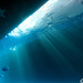 Sea Star! (Explored)