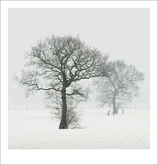 Bomen in de sneeuw en mist / trees in snow and mist | by Bram Meijer