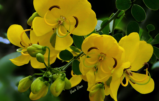 F Da B further F A B Z in addition F B besides Px Passifloracaerulea Flower M also Px Superf C Adcie Paraboloide Hiperb C B Lico Lema Ufba. on f da b