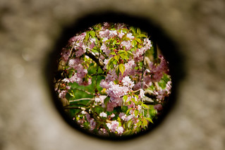 spring through a hole in the 49th parallel | by Yaisog Bonegnasher