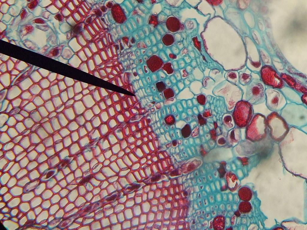 Microscopic Shot