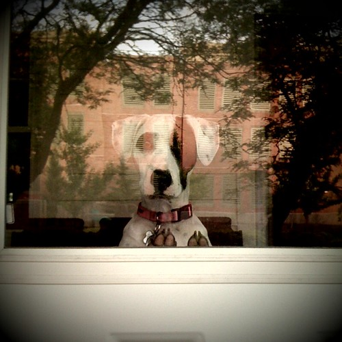 What I see whenever I leave the house without Lucy. | by MelissaS