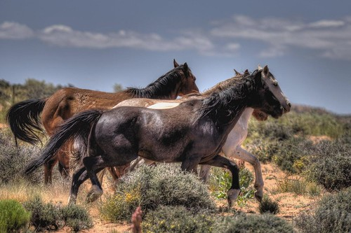 Wild Horses III | by RightBrainPhotography