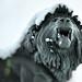 The Maiwand Lion