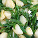 Simple Side Dish: Potatos and Runner Beans tossed in Olive Oil and Garlic