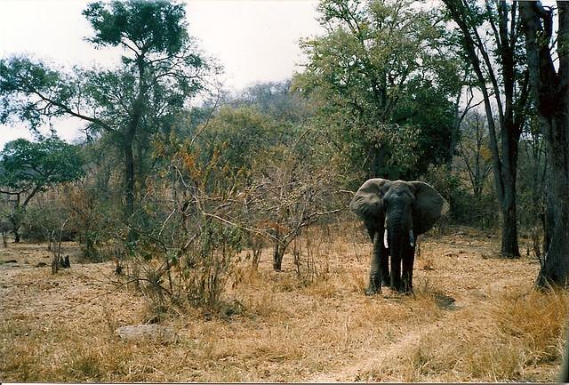 Rezultat iskanja slik za zimbabwe safari