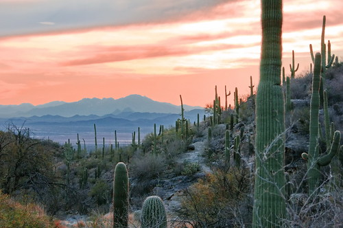 Saguaro and sunset mountains | by Dave Bezaire