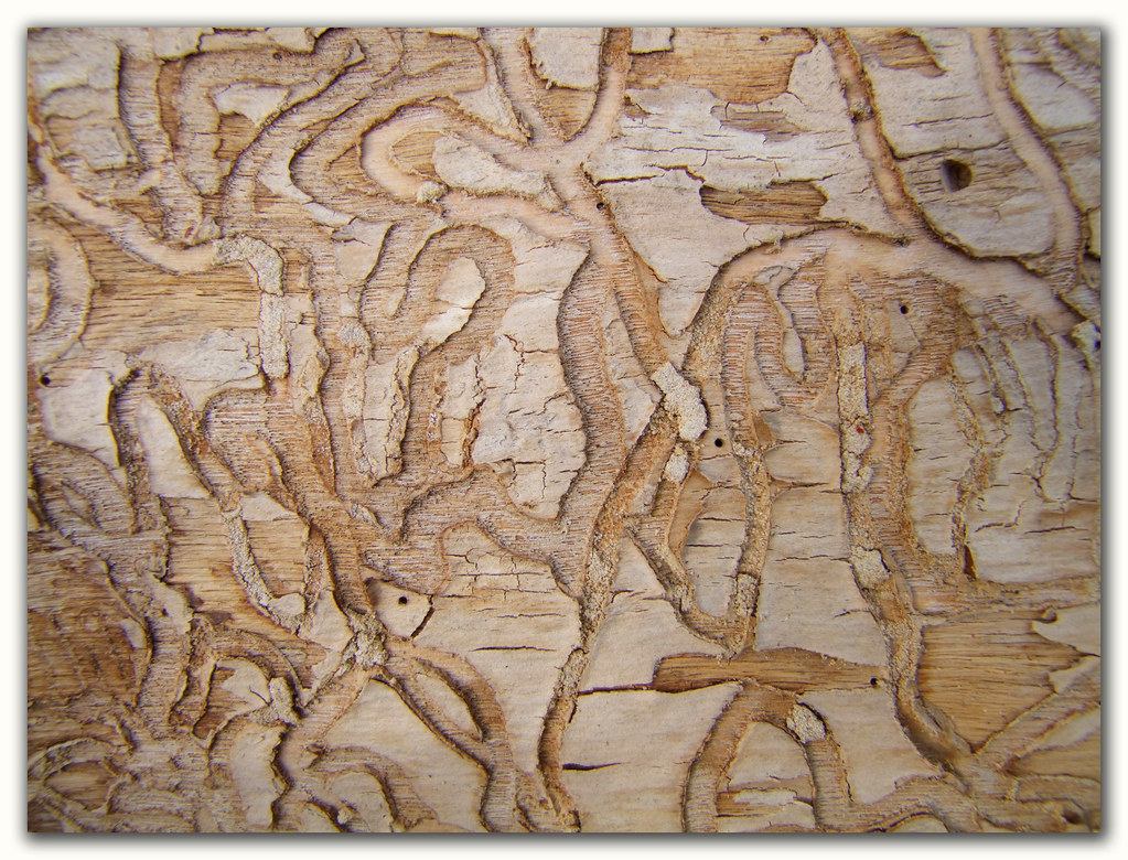 how to get a piece of wood cut