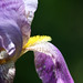 Filoli Gardens 035