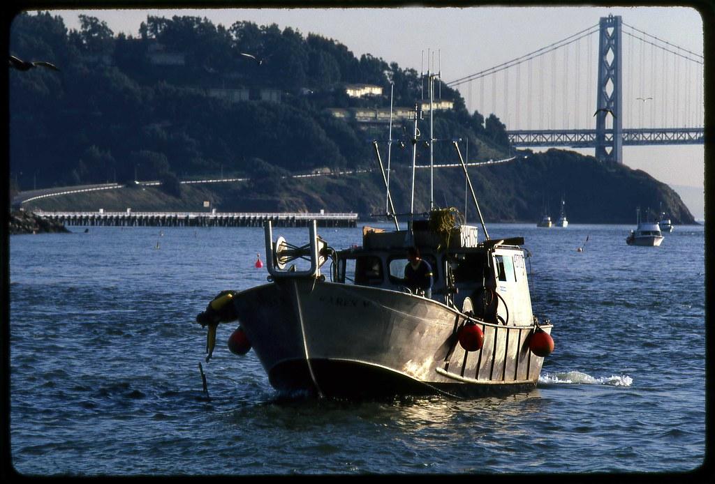 Herring fishing san francisco bay frank keillor flickr for Sf bay fishing report