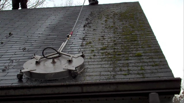 Roof Cleaning Lichen Colonies What Are Lichen Colonies