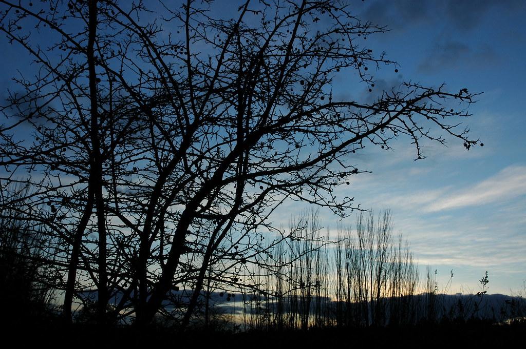 Sunset Dog Park Ashgrove