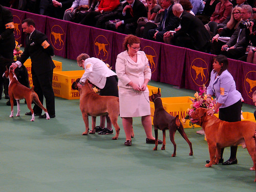 134th Westminster Kennel Club Dog Show Madison Sq Garden 1 Flickr