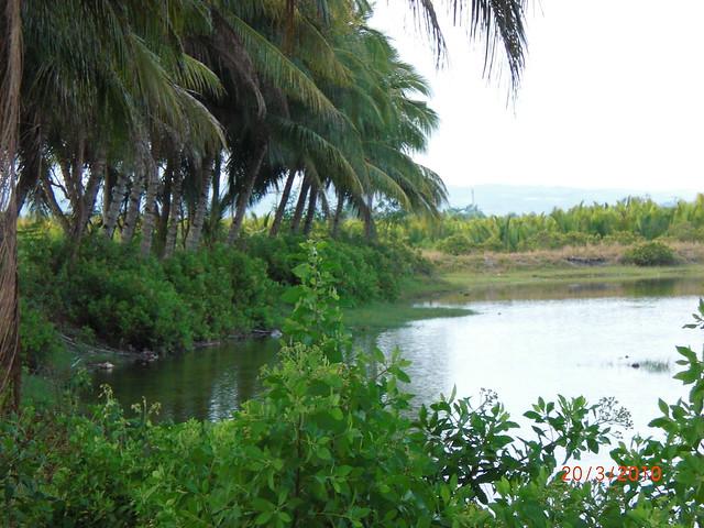 Pure Nature Coconut Oil