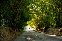 St Elizabeth: Bamboo Ave | by BrianRosenPhotography