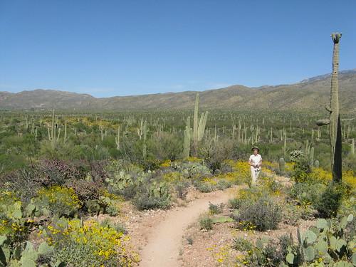 Tucson - Saguaro NP