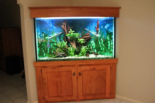 Corner fish tank flickr photo sharing for Fish tank camera