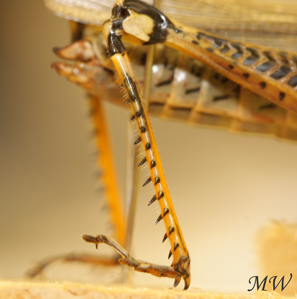 Grasshopper Legs | I took this picture for this week's ...