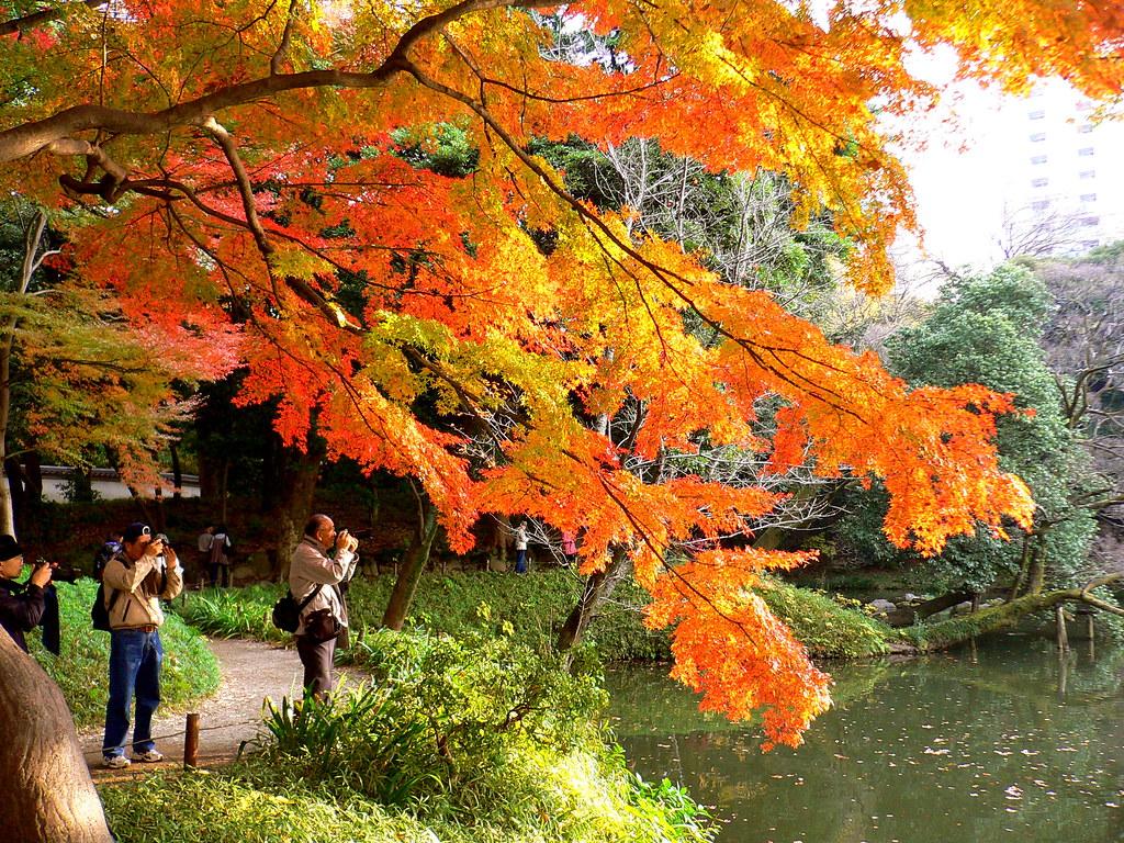 Image result for Koishikawa Korakuen Garden, Tokyo