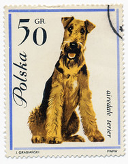 Airedale | by alexjacque