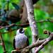 Bird of some sort