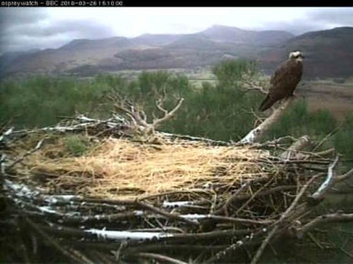The lake district osprey project