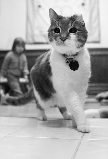 Cat Nipped Ear