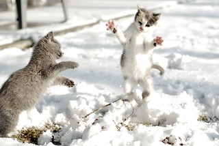 Leaping Kittens | by Davidaw!