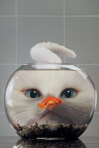 Cat and the Fishbowl iPhone wallpaper | by xploitme
