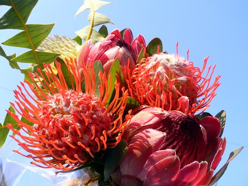 Exotic Bouquet Flowers Of South Africa The King Protea Flickr