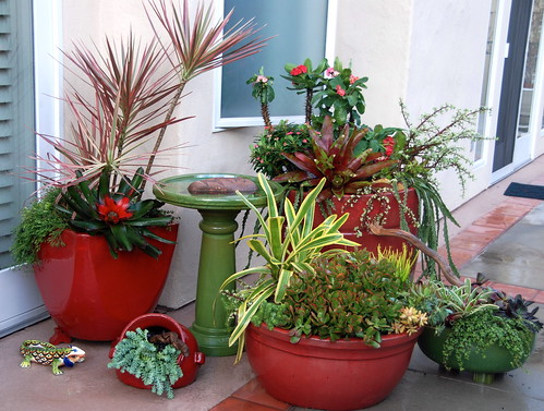 Succulent container gardens dsc 0819 photo and succulent d flickr - Dish garden containers ...