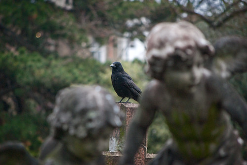 The Crow & the Cherubs | by Rowan_Wesley