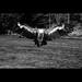 ...Vulture...